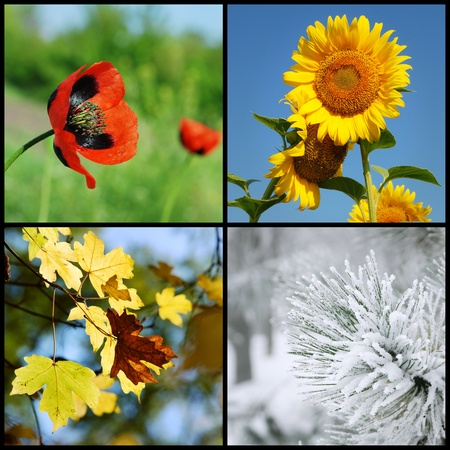 Collage of 4 pictures representing each season: winter, spring, summer, autumn photo