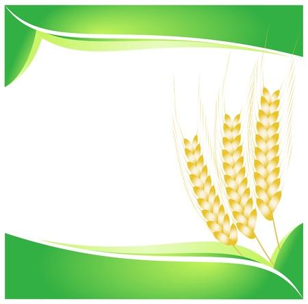 produits céréaliers: Blé abstrait - isolé sur blanc - illustration