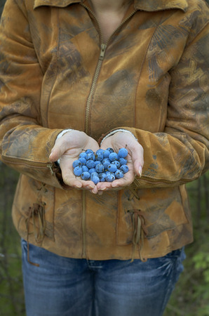 Woman presenting blackthorn berry in hand
