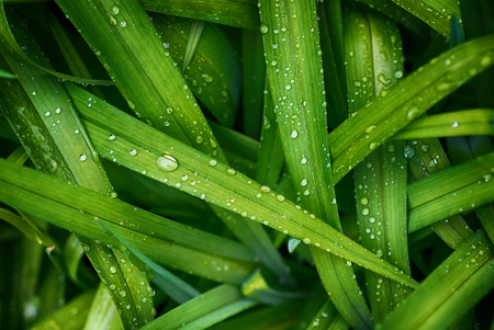 Drop on green grass Stock Photo