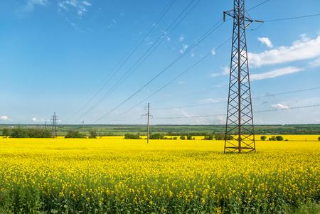 yellow line: Power line above yellow flowers Stock Photo