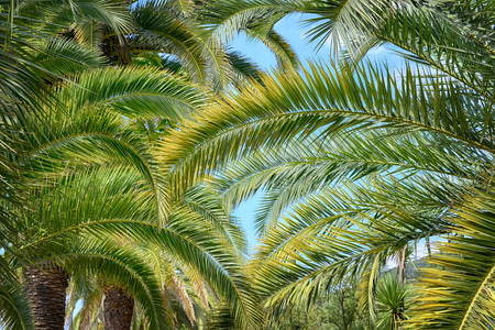 Lush green palm leaves in tropical forest Stock Photo