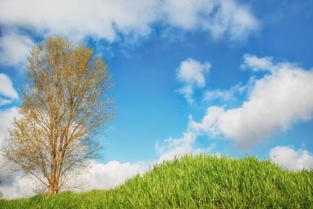 Green grass and blue sky with clouds and tree
