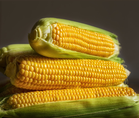 Fresh uncooked maize on a table