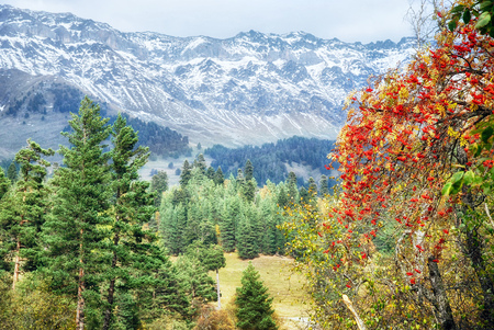 Caucasus mountains, covered with colorful autumn forests Stock Photo