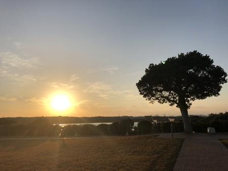 Sunset sea and tree 스톡 콘텐츠