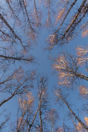 Chinese Inner Mongolia Hulun Buir baihualin autumn