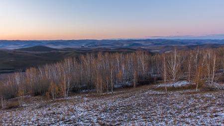 Sunset of birch forest in Inner Mongolia, Hulun Buir, China
