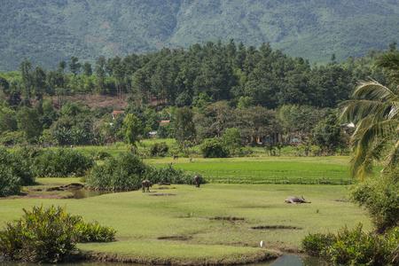 The pastoral scenery of Vietnam Фото со стока