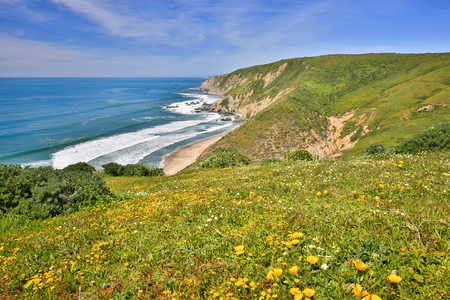 elk point: Pacific Ocean from Tomales Point Trail, Point Reyes National Seashore