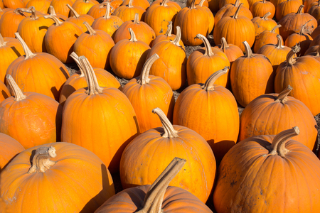 davenport: Scattered Pumpkins. A pumpkin patch in Davenport, California, USA.