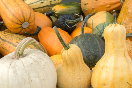 goodies: Variety of Pumpkin and Squash on a Pumpkin Patch stand in Northern California. Multicolored eye-catching variety of goodies for Halloween.