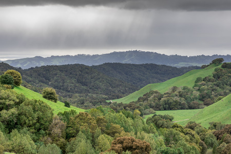 Lush and Greenery After Long California Drought. Briones Regional Park, Contra Costa County, California, USA.