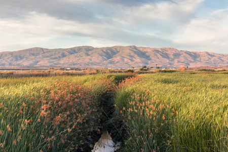 Alviso Wetlands and Diablo Mountain Range. Alviso Marina County Park, Santa Clara County, California, USA.