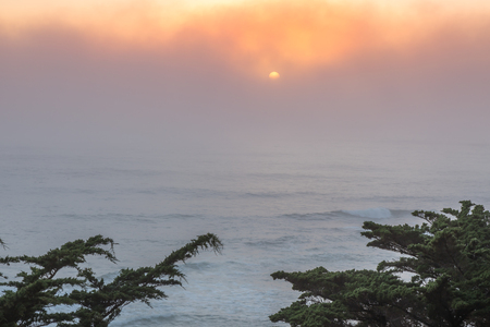 Pacific Ocean Foggy Sunset With Cypress Trees. Moss Beach, San Mateo County, California, USA.