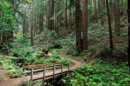 craig: Bridge to Redwood Forest. Purisima Creek Redwoods Open Space Preserve, Woodside, San Mateo County, California, USA. Stock Photo