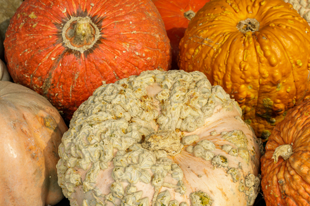 Knucklehead Pumpkins. Booth stand in Northern California.