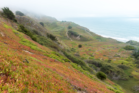 Foggy Ice Plant Dunes overlooking the Pacific Ocean. Thornton State Beach, Daly City, San Mateo County, California, USA.