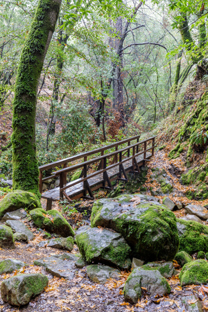 Footbridge in California Live Oak Forest. Uvas Canyon County Park, Santa Clara County, California, USA. Stock Photo
