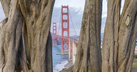 Golden Gate Bridge framed by Cypress Trees. California Coastal Trail, The Presidio, San Francisco, California, USA. Stock Photo