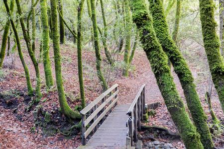 Footbridge in California Bay Laurel Forest. Creek Trail, Hidden Villa, Los Altos, Santa Clara County, California, USA. Stock Photo
