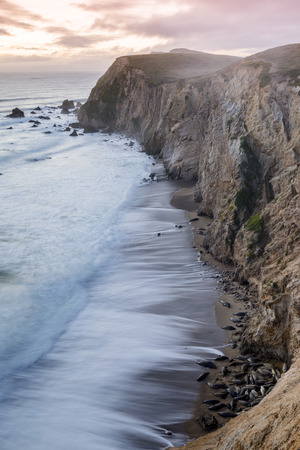 California Sea Lions on the beaches of Chimney Rock with crashing waves of the Pacific Ocean during winter sunset. Point Reyes National Seashore, Marin County, California, USA. Stock Photo