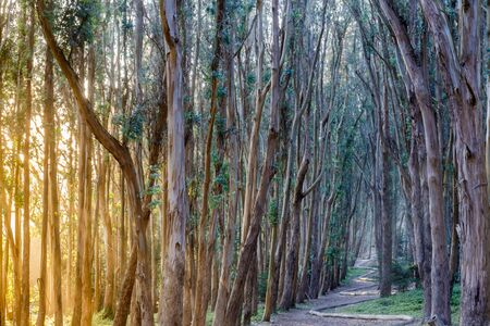 Wood Lane (AKA Lovers Lane) Trail at Sunset. The Presidio, San Francisco, California, USA. Reklamní fotografie