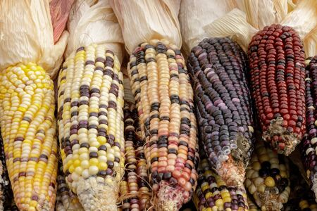 Colorful Indian Corn on a stand in Farmers Market on October. Half Moon Bay, California, USA.