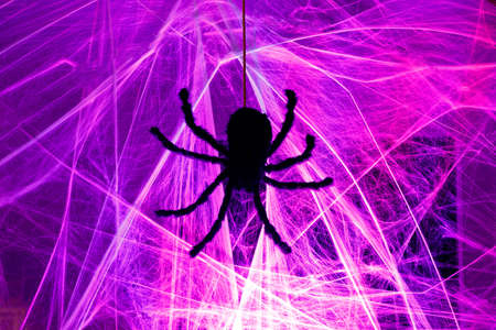 Down Came A Spider. Black Spider Crawling on Purple Cob Web Halloween Light Up Night Decoration.
