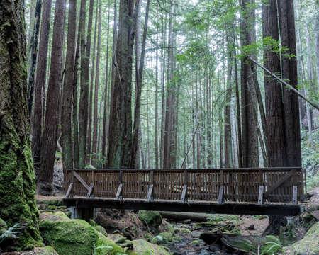 Creek crossing footbridge at Corte De Madera Creek Preserve. Redwood City, San Mateo County, California, USA. Фото со стока