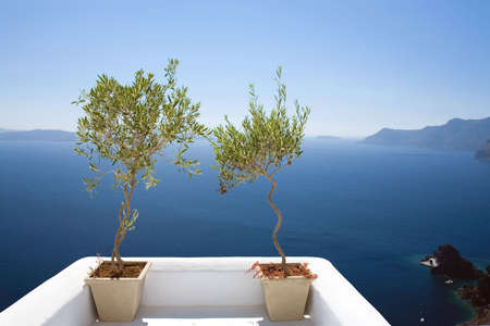 Olive Trees Overlooking the Sea Foto de archivo