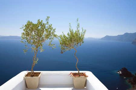 greek pot: Ulivi a picco sul mare