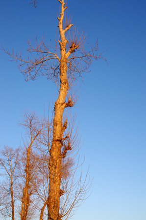 wintery snowy: Winter tree Stock Photo