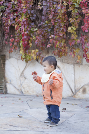 12 18 months: Happy Chinese baby boy standing in front of Boston Ivy, shot in Beijing, China