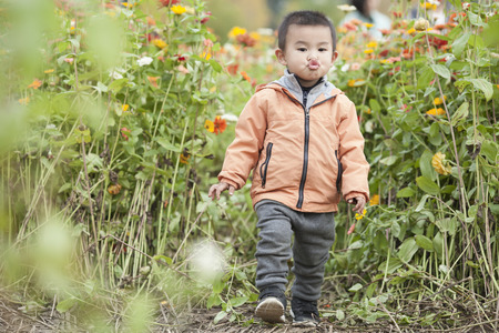 Cute Chinese baby boy playing in blossoms, shot in Beijing, China