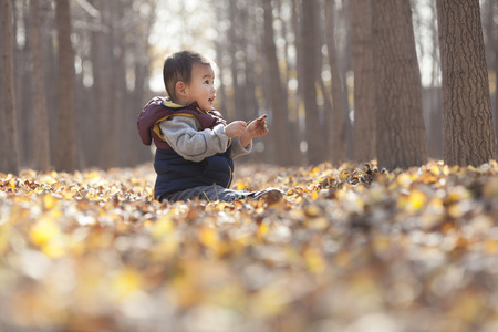 one child: Chinese baby boy playing in ginkgo woods, shot in Beijing, China Stock Photo
