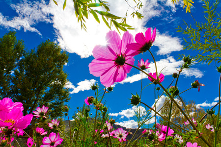 eight: eight plum pink flower