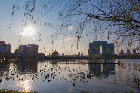 cycas: Guizhou Anshun Hong Reservoir