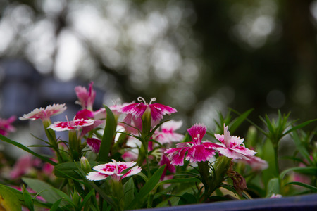 blosom: Close up of flowers blooming