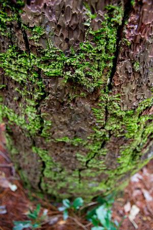 enviroment: close up of old tree bark