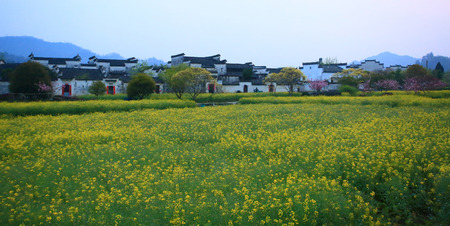 residents: Housing residents with yellow meadow