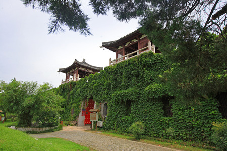traditional plants: Ivy plants covering a traditional chinese building Editorial