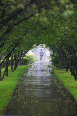 drizzling rain: Man walking through a tree tunnel Stock Photo
