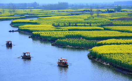 snapshots: Tourist boats a long the rapeseed flower field waterway
