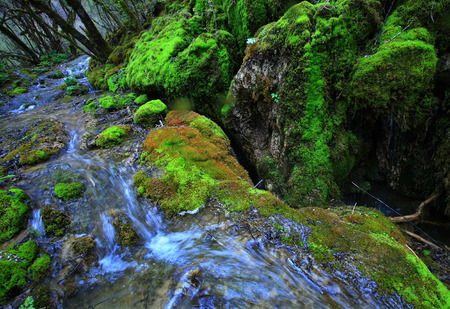 �rock formation�: Rock formation covered with moss