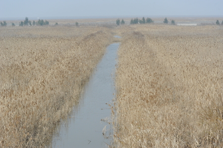 weeds: Marsh weeds in a wetland Stock Photo