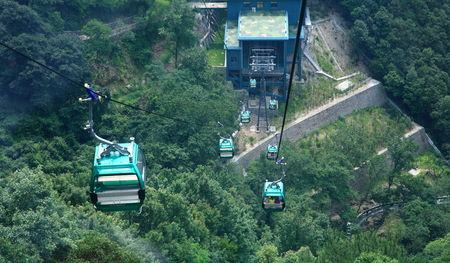 hill station tree: Cable cars moving along a cableway Editorial