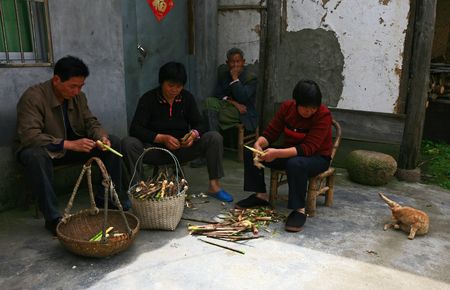 back alley: People picking bamboo shoots in back alley