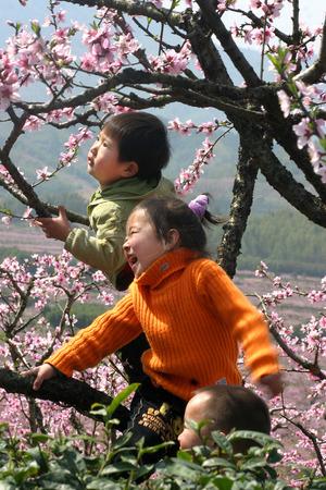 peach tree: Three kids playing on peach tree