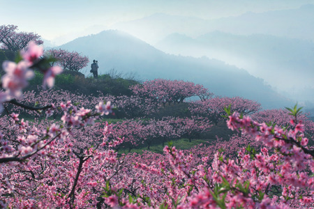 peach tree: Man with camera standing in a peach tree garden Stock Photo
